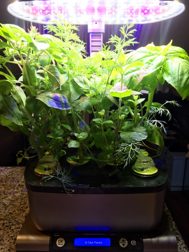 AeroGarden Update Week 4.jpg