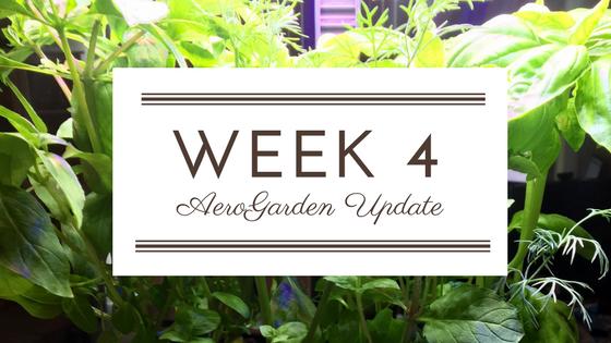week-2-3