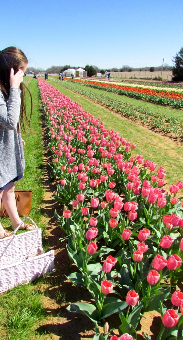 Texas Tulips Field