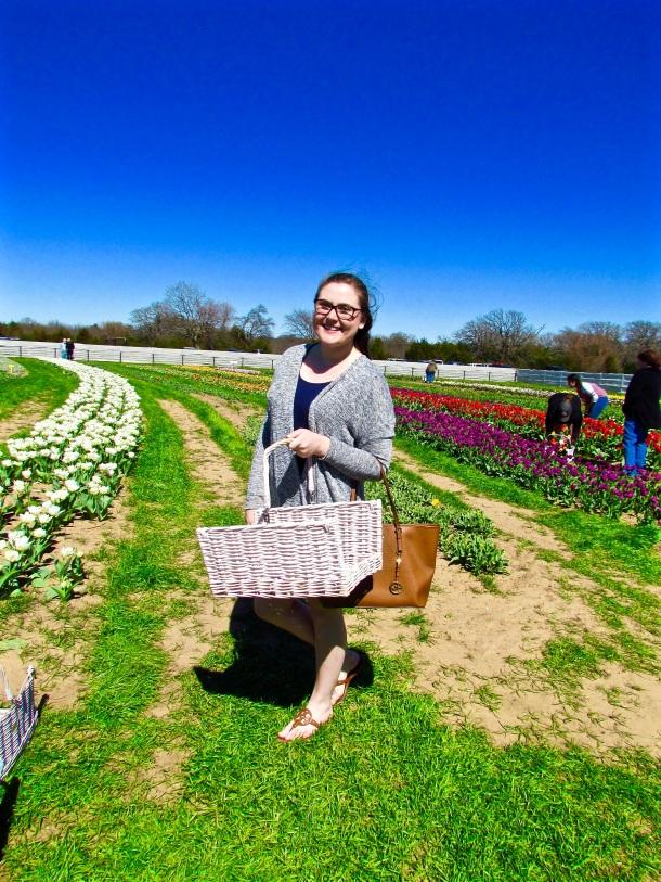 Tulip Picking