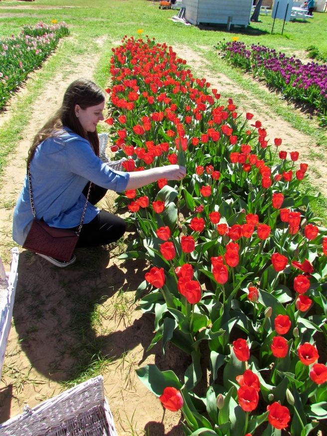 Tulips Texas