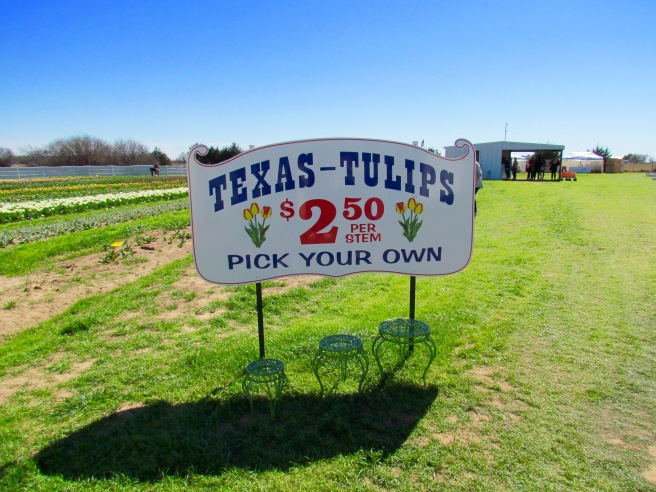 Welcome to Texas Tulips